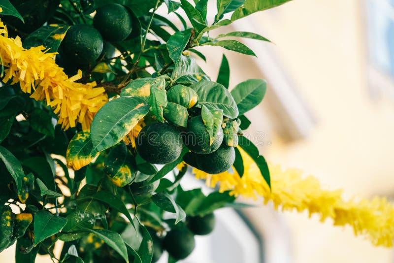 La fruta cítrica verde abona las frutas con cal en árbol imagen de archivo libre de regalías
