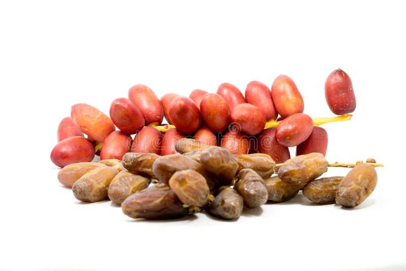 La fruta de la palma datilera de sequedad y la palma datilera roja fresca dan fruto en el fondo blanco fotos de archivo libres de regalías