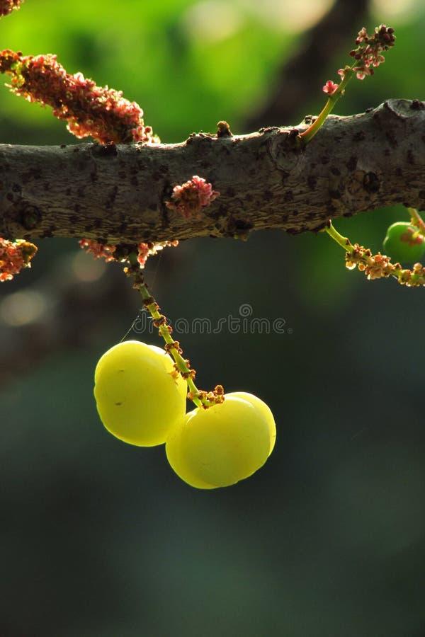La fruta fresca foto de archivo libre de regalías