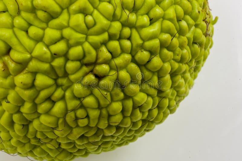 La fruta verde del pomifera del maclura, naranja de osage, manzana del caballo, nuez de Adán crece en la tabla de madera blanca fotografía de archivo libre de regalías
