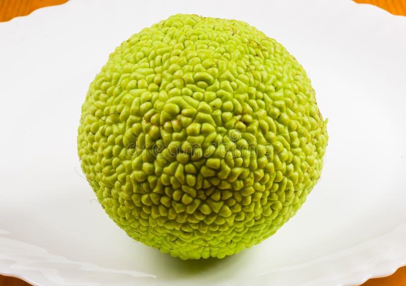 La fruta verde del pomifera del maclura, naranja de osage, manzana del caballo, nuez de Adán crece en la tabla de madera blanca imagen de archivo libre de regalías