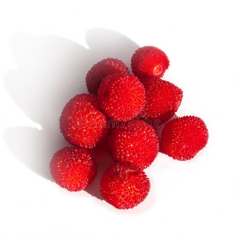 La frutta o il Madrono della fragola dall'arbutus unedo inoltre ha chiamato il corbezzolo, Apple del nativo di Cane Apple o, di C fotografia stock libera da diritti