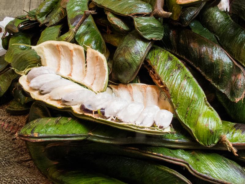 La frutta tropicale esotica ha chiamato il guama immagini stock libere da diritti