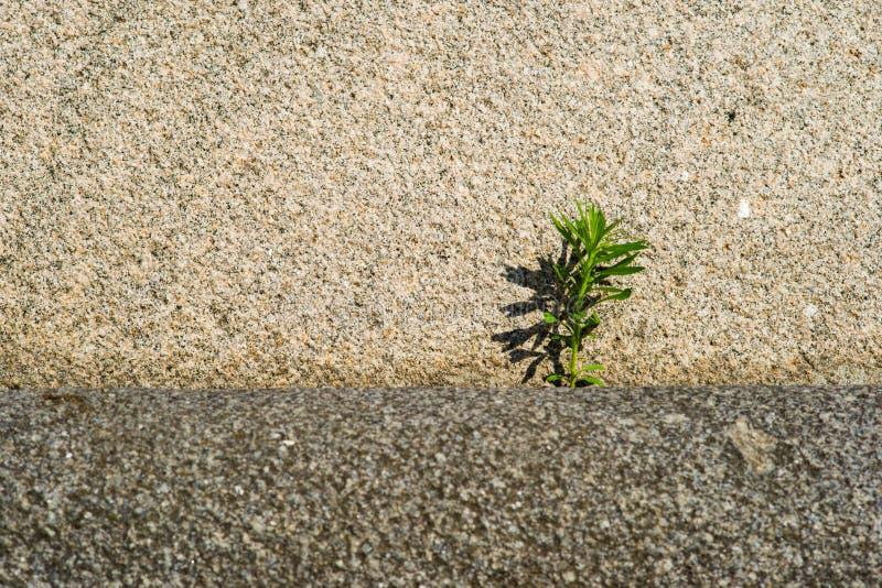 La fuerza de la piedra y el poder de la vida fotografía de archivo libre de regalías