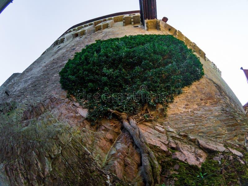 La fusione di fauna selvatica con una pietra sulla parete del tejn del ¡ di PernÅ del castello fotografia stock libera da diritti