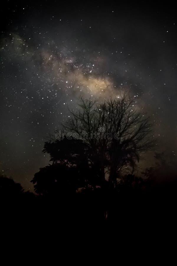 La galassia della Via Lattea e la siluetta dell'albero fotografia stock libera da diritti