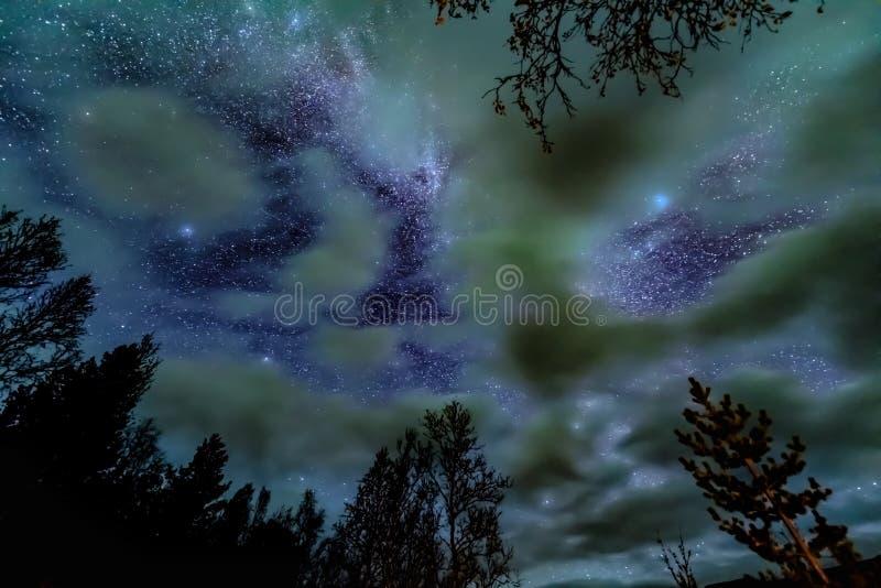 La galaxia de la vía láctea sobre bosque foto de archivo