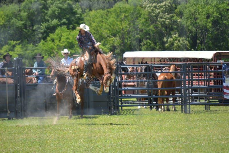 La gama abierta montó el montar a caballo del Bronc de la silla de montar fotografía de archivo