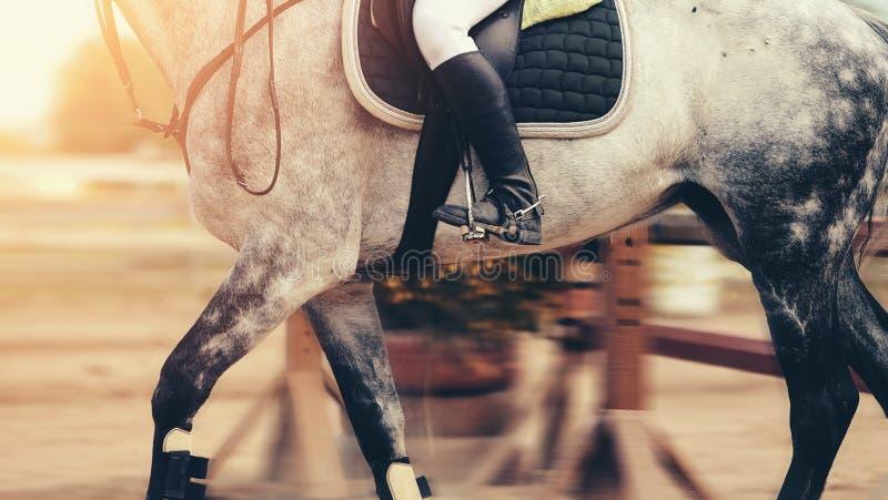 La gamba del cavaliere nella staffa immagini stock libere da diritti