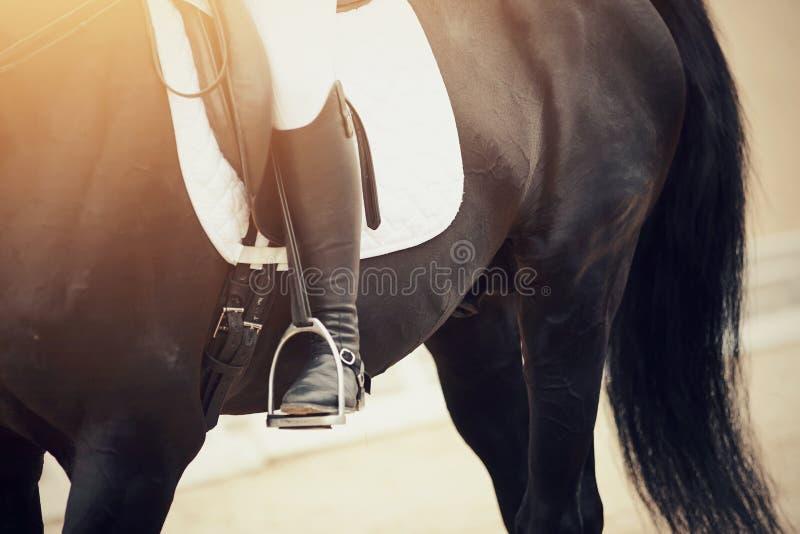 La gamba del cavaliere nella staffa immagine stock