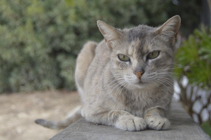 La Gata royalty free stock image