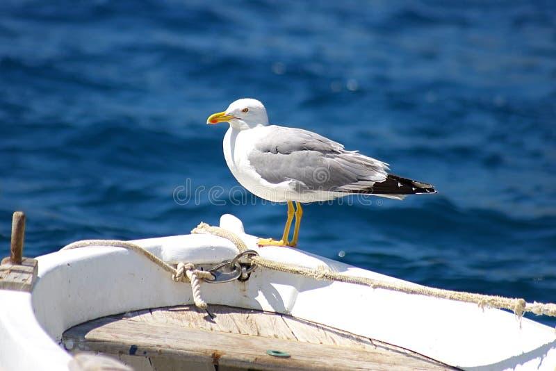 La gaviota que se sienta en una nariz de un barco de pesca imagen de archivo libre de regalías