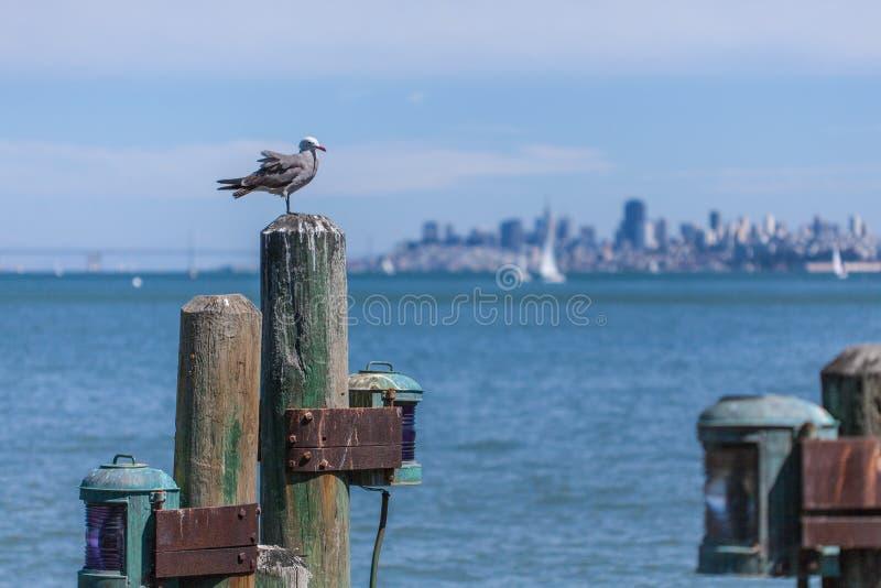 La gaviota se encaramó en los posts del muelle con el horizonte de San Francisco en fondo fotografía de archivo libre de regalías