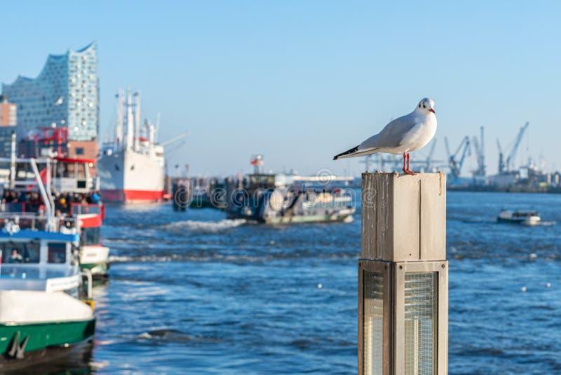 La gaviota se sienta en un polo en el puerto de Hamburgo imagen de archivo