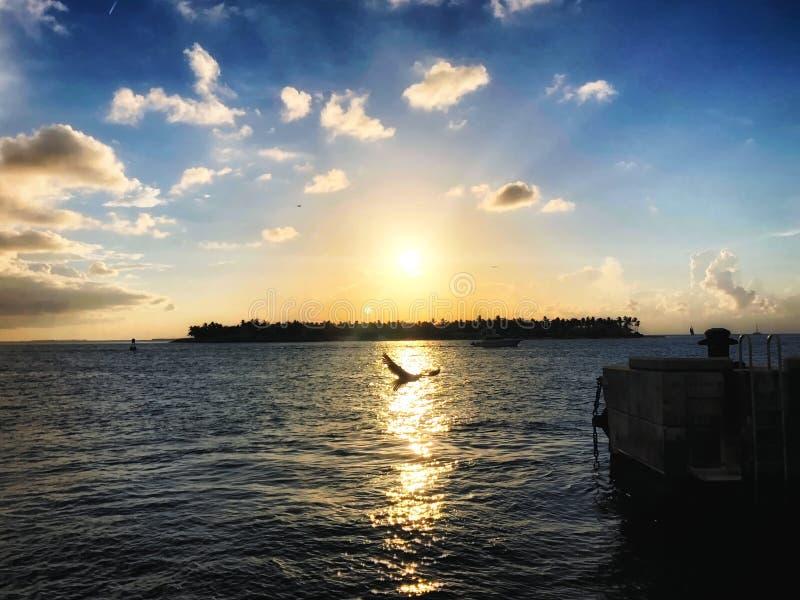 la gaviota vuela en la puesta del sol imágenes de archivo libres de regalías