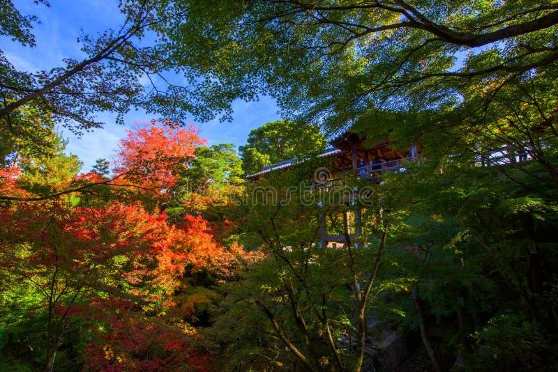la gente al tempio di Tofukuji vede le foglie di autunno fotografia stock