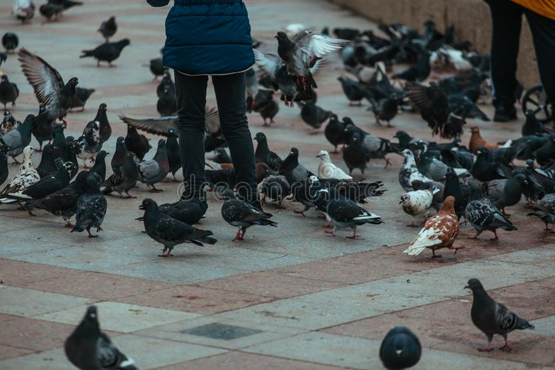 La gente alimenta i piccioni sulla via della città, fine su fotografia stock libera da diritti