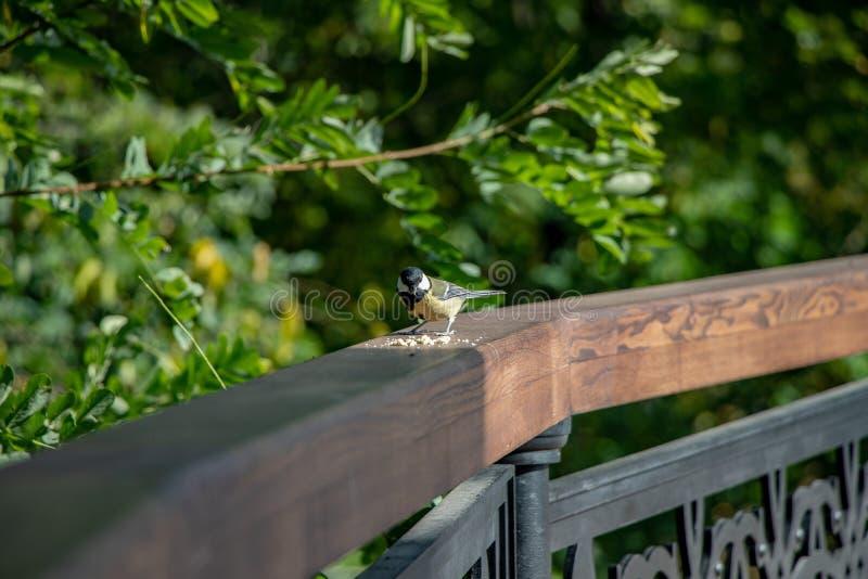 La gente alimenta los pájaros en el parque del otoño de la ciudad fotos de archivo libres de regalías