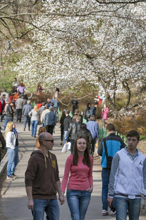 La gente camina entre las magnolias florecientes en el parque de Kiev, Ucrania imagenes de archivo