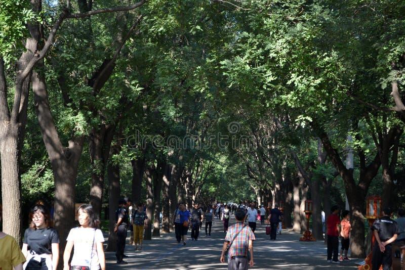 La gente che cammina sotto gli alberi intorno a Pechino Il Pic è stato contenuto fotografia stock