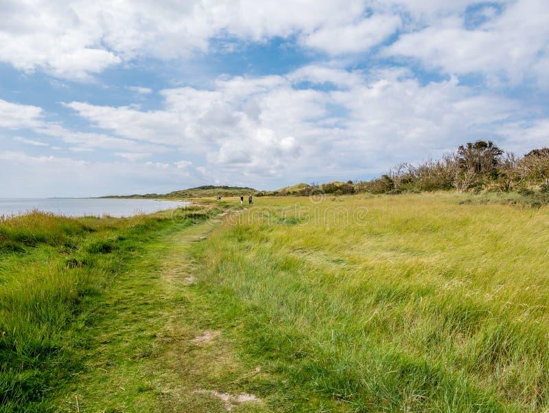 La gente che cammina sul sentiero per pedoni nel Het Oerd della riserva naturale alla costa di Waddensea dell'isola frisone ad ov immagine stock libera da diritti