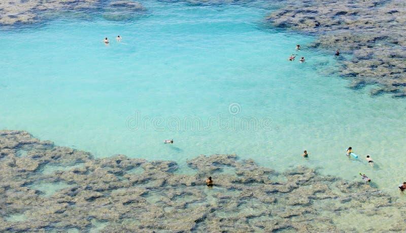 La gente che gode delle acque cristalline alla prerogativa di natura della baia di Hanauma immagine stock libera da diritti
