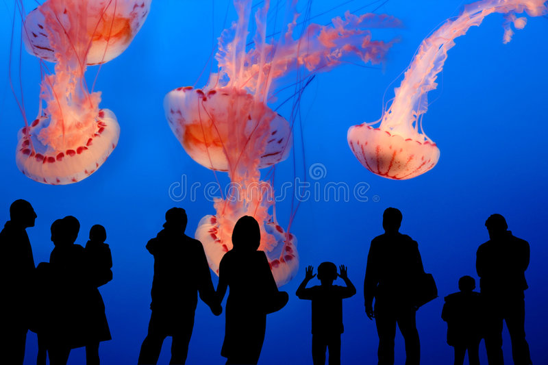 La gente che guarda le meduse giganti nell'acquario immagini stock