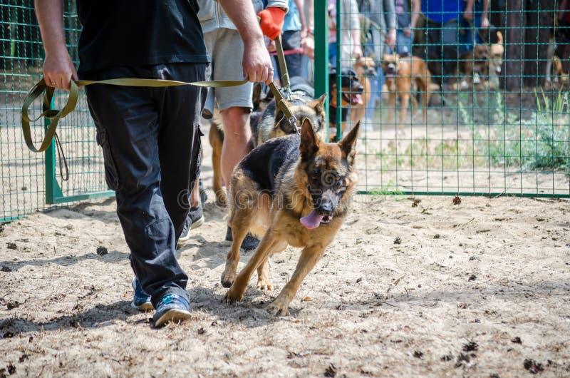La gente con sus perros vino al terreno de entrenamiento para las pruebas del comportamiento del perro foto de archivo libre de regalías