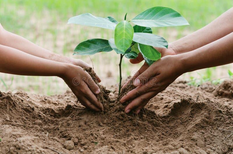la gente da a planta de ayuda el árbol que trabaja junta en la granja concentrada fotos de archivo libres de regalías