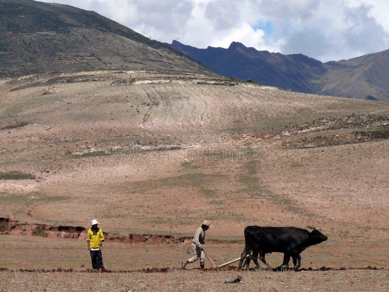 La gente del Perù fotografia stock libera da diritti