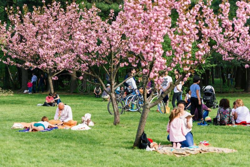 La gente divertendosi nel giardino giapponese del parco di Herastrau sulla primavera di fine settimana immagine stock