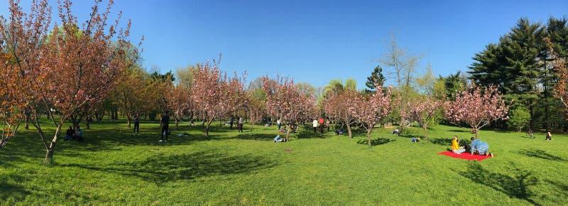 La gente divertendosi nel giardino giapponese del parco pubblico di Herastrau il giorno di primavera di fine settimana fotografia stock