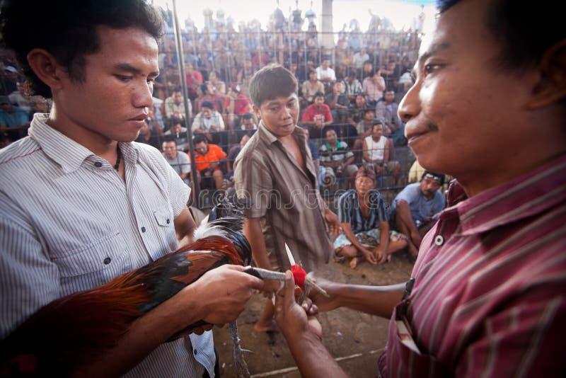 La gente durante il cockfighting di balinese fotografia stock libera da diritti