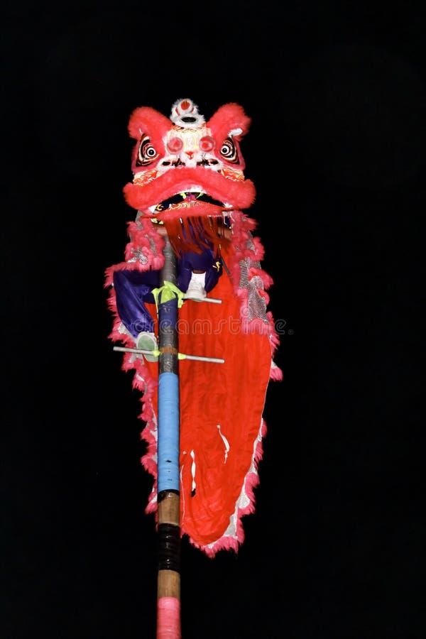 La gente está mostrando la danza de león y el festival chino del Año Nuevo del dragón del fuego imagen de archivo