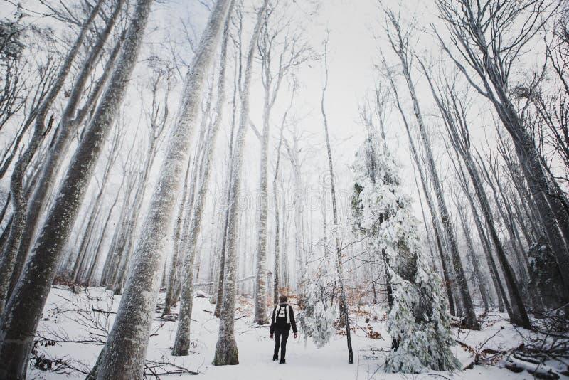 La gente in foresta nebbiosa immagini stock libere da diritti