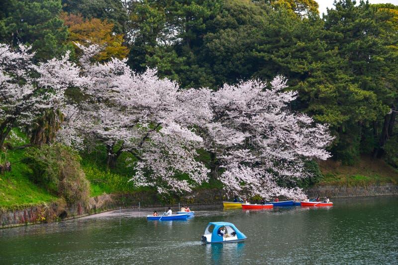 La gente goza de las flores de cerezo en el parque imagen de archivo