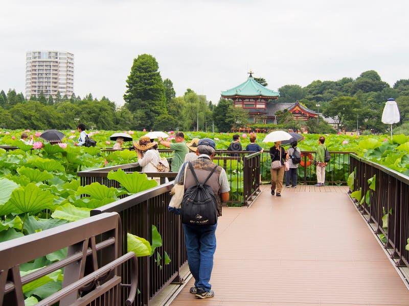 La gente goza el tomar de la fotografía en la charca de loto en el parque de Ueno imágenes de archivo libres de regalías