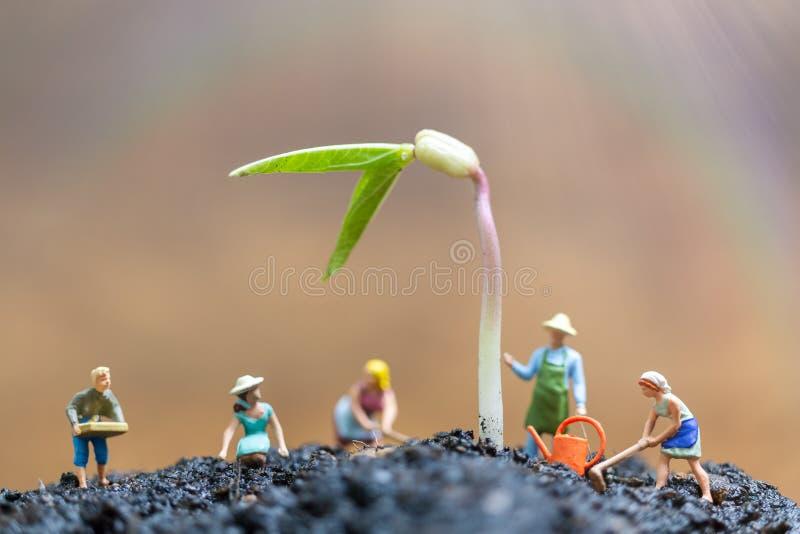 La gente miniatura, giardinieri ciao il germoglio crescente nel campo immagini stock libere da diritti