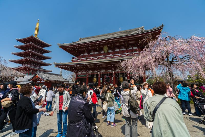 La gente no identificada visita el templo de Sensoji con la flor de cerezo en Asakusa, Tokio, Jap?n imágenes de archivo libres de regalías
