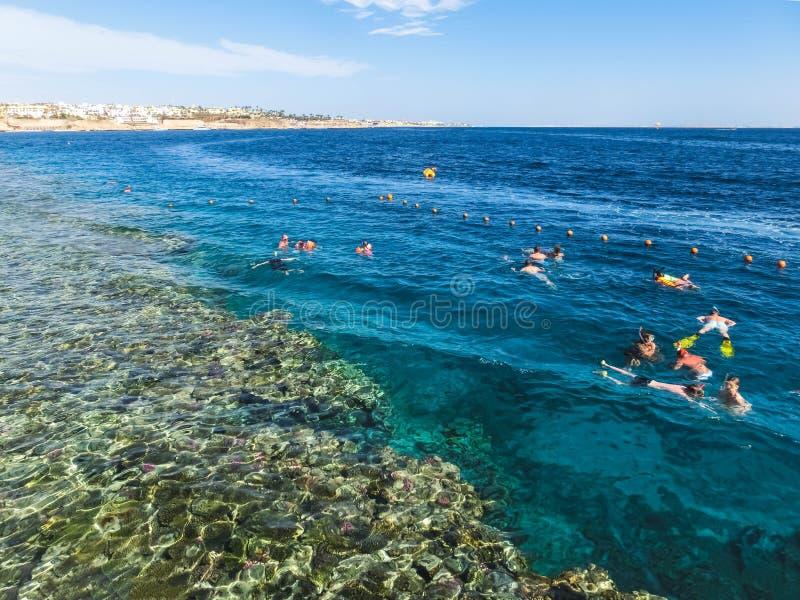 La gente que bucea en aguas azules sobre el arrecife de coral en el Mar Rojo en Sharm el Sheikh, Egipto foto de archivo