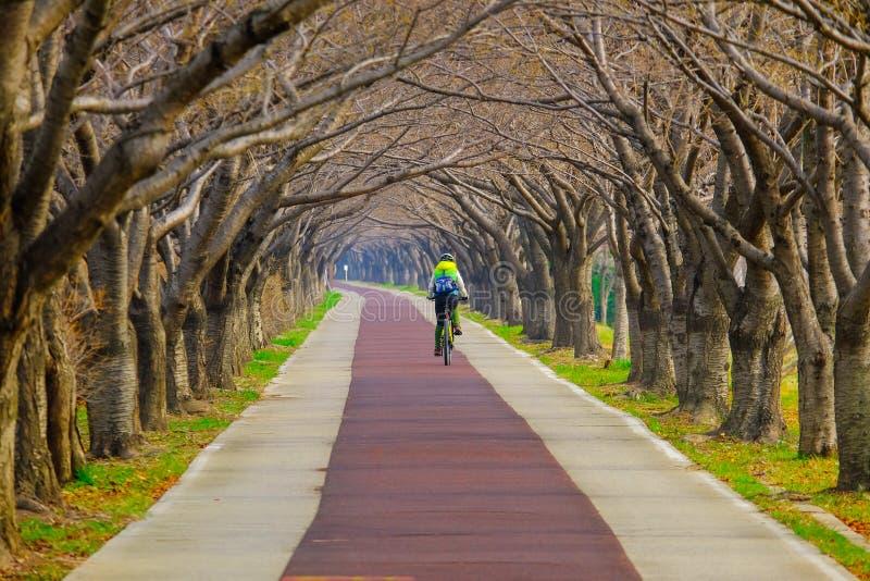 La gente que completa un ciclo en la manera debajo de la flor de cerezo hace un túnel en la ciudad de Gimhae de la Corea del Sur fotos de archivo