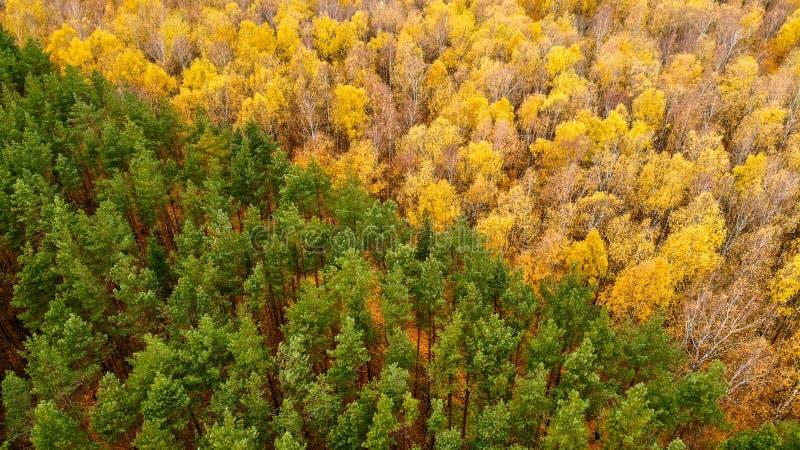La geometria in autunno fotografie stock