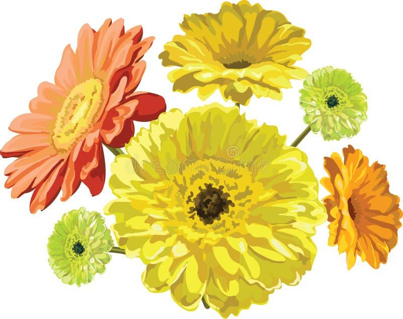 La gerbera fiorisce giallo, l'arancia ed il vettore dipinto verde isolata royalty illustrazione gratis