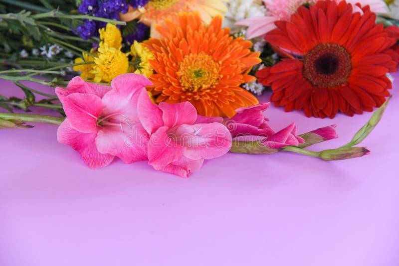 La gerbera variopinta del bello fiore e fiori della molla di gladiolo decorano il fondo rosa immagine stock