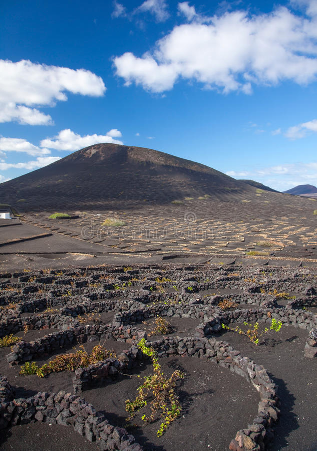 La Geria, Lanzarote, Kanarische Inseln lizenzfreie stockbilder