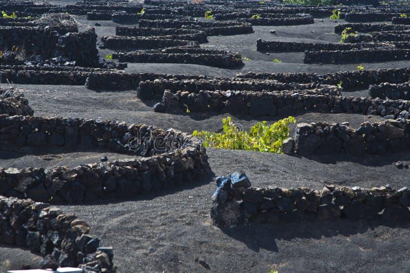 La Geria - vineyard region of Lanzarote