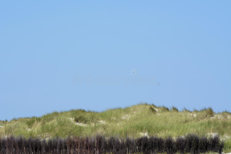 La Germania, Schlesvig-Holstein, Heligoland, duna con sparto pungente immagini stock libere da diritti