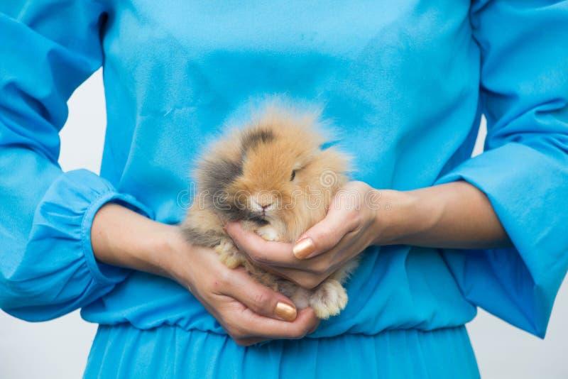 La giovane bella donna abbraccia il mini coniglio immagine stock libera da diritti