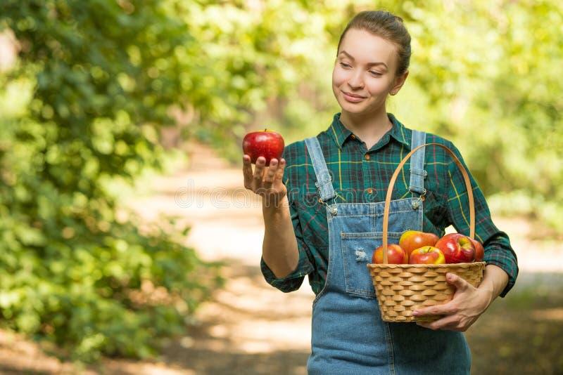 La giovane bella ragazza dell'azienda agricola sta raccogliendo le mele Il concetto del raccolto di autunno o di estate con spazi fotografia stock libera da diritti