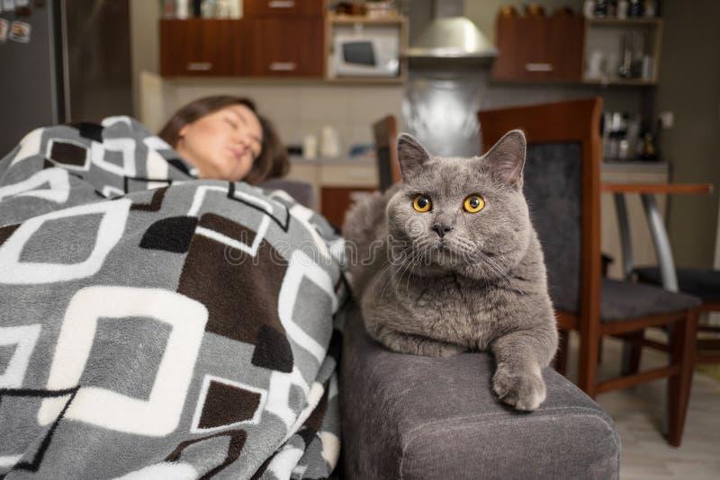 La giovane donna che dorme con il suo gatto, gatto sta aspettando quando la ragazza sveglia, gatto sta sedendosi vicino alla raga immagine stock